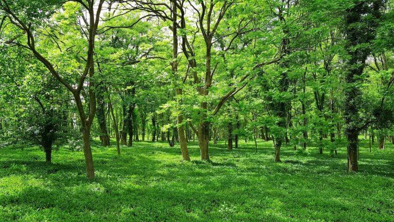 Lush Green Trees
