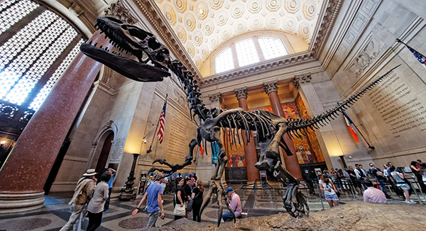 people gathering around dinosaur  skeleton at museum