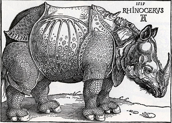 old illustration of rhinoceros